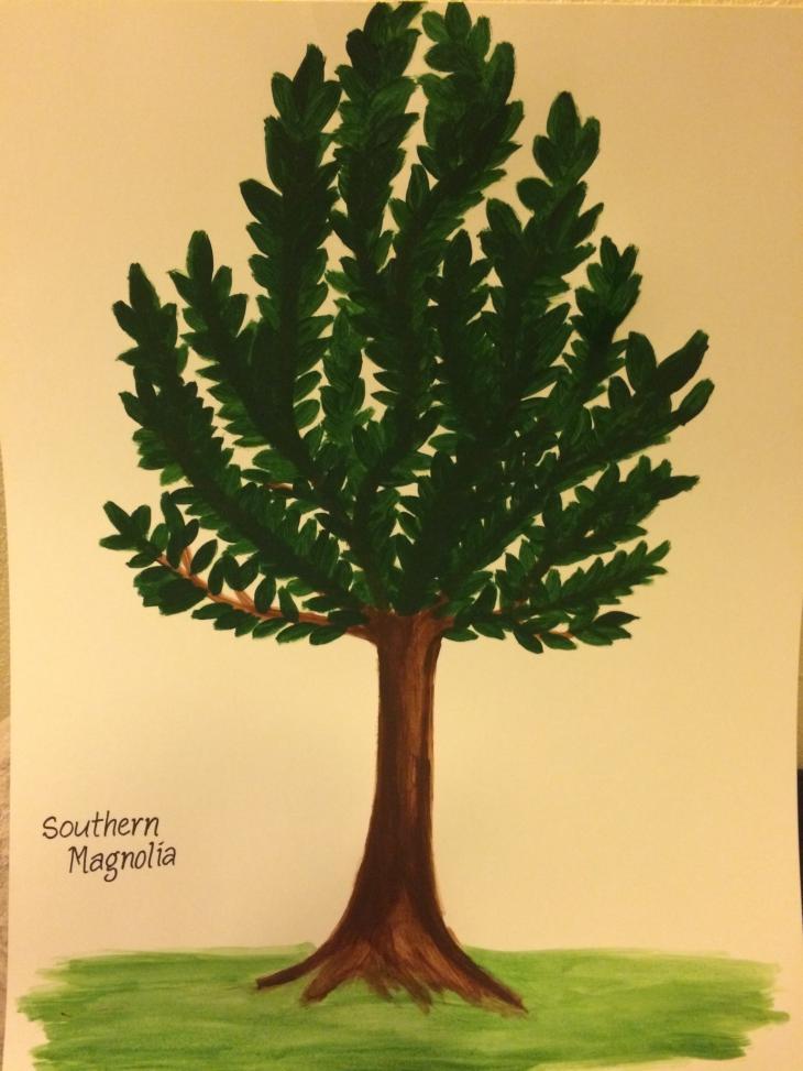 Southern Magnolia Yale Nature Walk