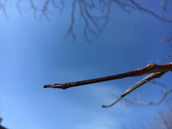 locust fork senior dating site 3044 county highway 15 oneonta, alabama 35121  locust fork  junior high school : locust fork  senior high school :.